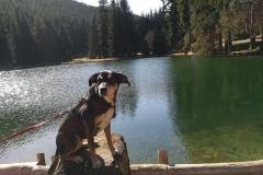 Hundeurlaub-Lütschestausee