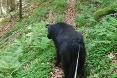 Urlaub-mit-Hund-in-Gehlberg